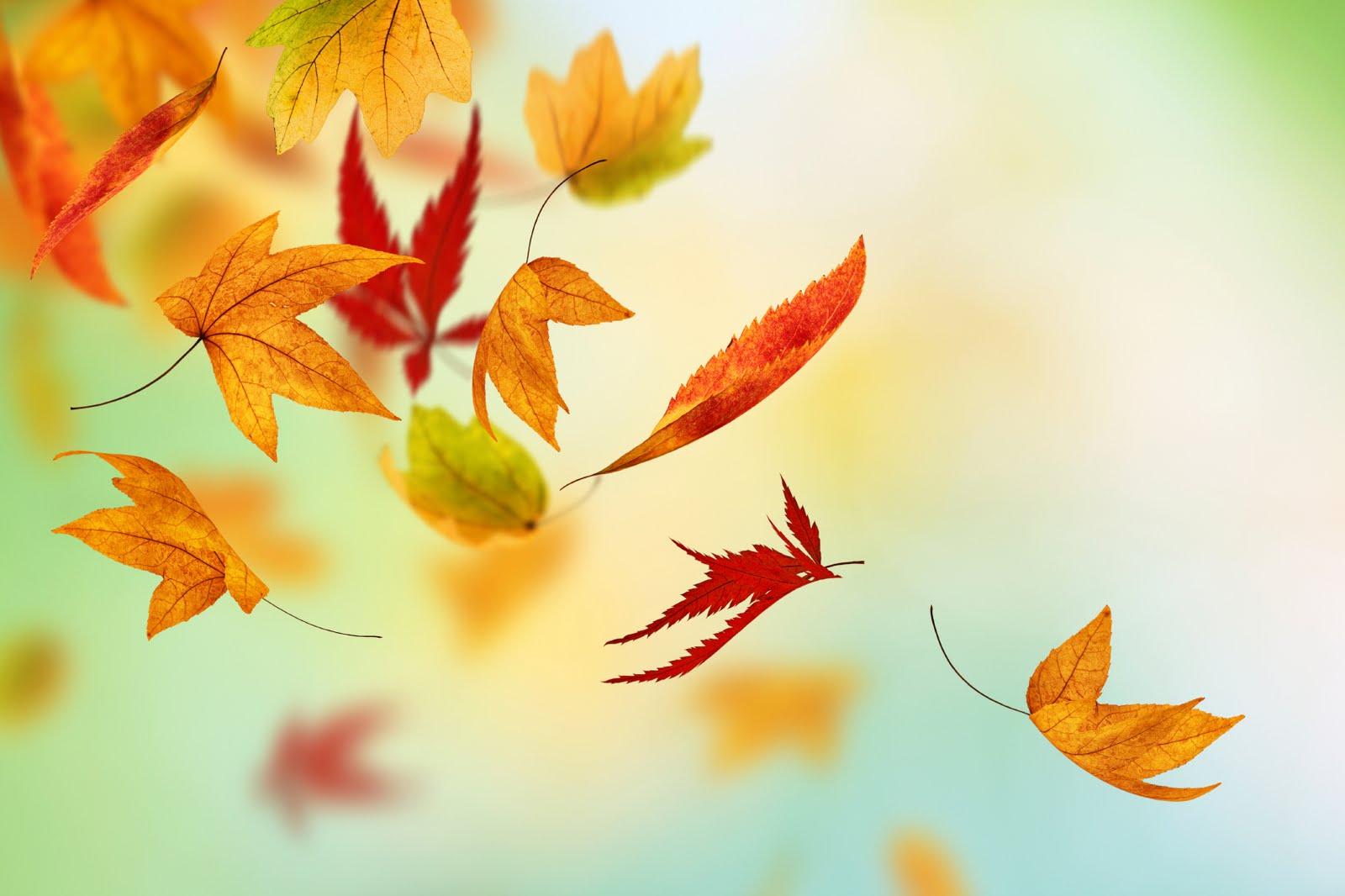Falling-Leaves-New