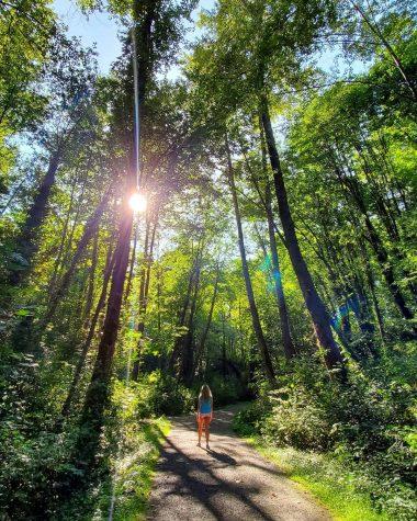 Person walking down path, sunlight peaking through through tall trees