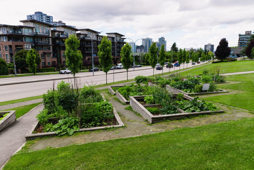 Community garden at City Hall in New Westminster.
